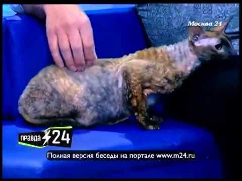 Сергей Астахов о домашних животных